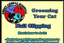 Cat Grooming Tips / Cat Grooming Tips
