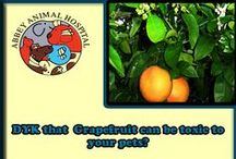 Plants That Could Be Toxic To Your Pets / Learn What Plants Could Be Toxic To Your Pets