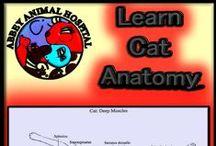 Cat Anatomy / Learn Your Cat's Anatomy