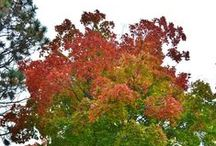 The Seasons of UMM / Take a look as the beautiful, diverse seasons of UMM are captured.