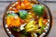 plants & herbal remedies