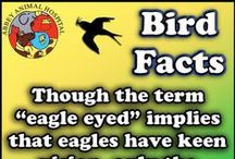 Facts About Birds / Facts About Birds