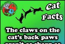 Facts About Cats / Facts About Cats