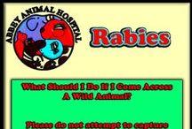 Rabies Information / Rabies Information