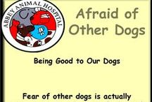Dogs Who Are Afraid Of Other Dogs / Dogs Who Are Afraid Of Other Dogs