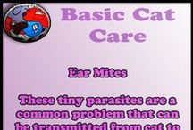 Basic Cat Care / Helpful Tips For Basic Cat Care
