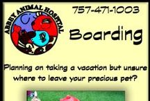Boarding Services / Did You Know Abbey Animal Hospital Offers Boarding Services