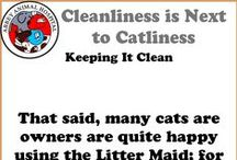 Cleanliness Is Next To Catliness / Cleanliness Is Next To Catliness