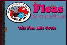 Fleas: Know Your Enemy / Fleas: Know Your Enemy
