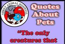 Pet Quotes / Pet Quotes