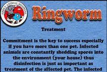 Ringworm / Ringworm