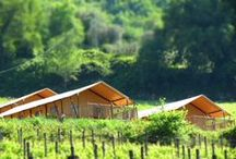 Glamping with great view / Discover our tents with great view