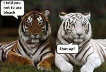 Bahahaha! / by Kirsty Smurf
