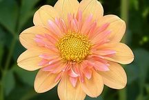Flowers and Gardens! / by Shelley Hayden-Bodnar