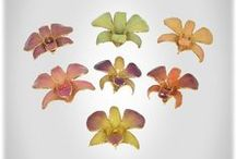 Preserved Gold Orchids / Fresh-cut, real orchids preserved forever in lacquer and trimmed in 24k Gold!