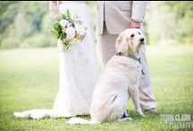 Pet-Friendly Weddings / It takes a lot to upstage the bride and groom on their wedding day, but what is cuter than a dog with a bow tie on? As a pet friendly wedding venue, we are including four legged friends more often than ever. In many cases, the inclusion of the pup is #1 on a couple's list of priorities. The personal details are what make your wedding yours and there isn't a detail more personal than including ALL the members of your family