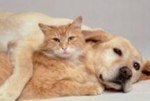 cure naturali x i nostri amici animali