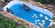 Duck Pool Ideas / Different ideas for duck pools/ ponds/ bathing areas, etc. Ideally that aren't a pain to clean and showcase materials useful for improving drainage...