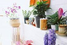 Plants for Tropical Beach Home Decor / Not sure what tropical plants will fit into your home design? This board has the answers.