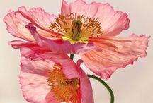 Floral Inspiration.
