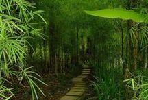 Nature   Tropical Gardens