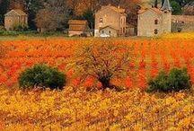 Nature   Vineyards