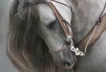 Horses / Horses symbolize freedom and purity. Freedom is the most valuable thing we have at most. Purity matters very much.