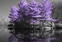 Colours   Lilac