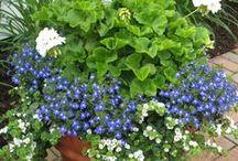 Pequeños jardines / Plantas en recipientes para decorar pequeños rincones.