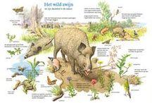 wild zwijn  recepten