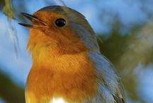 Vogels / gespot in onze tuin...