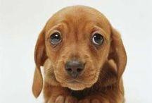 Schattig / Allemaal puppies en iets oudere honden...