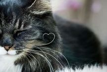 Whiskers / Animal whiskers!