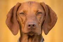 Dog Breeds from A to Z / Dog breeds from around the world. (AKC & FSS)