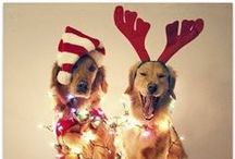 Deck the Paws / Everyone loves the PAWlidays :)