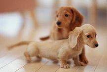 Animals / Hermosos y tiernos