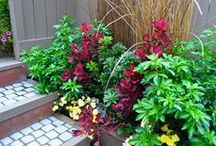 Salisbury Landscaping - A Blushing Garden / Some of our Award Winning spaces