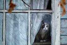 Window cats =^_^=