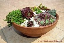 succulent ideas by Kövirózsa Dekor, pozsgás dekorációs ötletek a Kövirózsa Dekortól / succulent decoration ideas, gardening