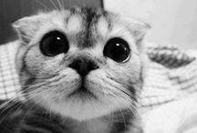 miaw? / gatos, obviamente xD