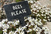 Bees / Everything bees. Save the bees, plants for bees, bee decor.