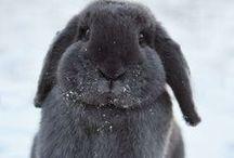 OUD --- Voor mijn konijnen / Ideetjes voor konijnen