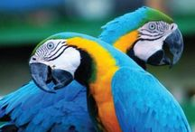All about parrots / Wish I could have one of each