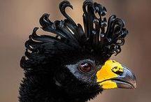 BIRDIES / Amazing Birds.