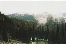 FOREST / Моя коллекция винтажных фотографий с хвойным лесом. Преимущественно из Канады.