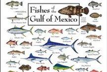 Florida & Florida Keys / A little bit of Everything.... Fishing ~Seafood ~ Shells