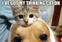 Funny Pet Memes / Memes with pets in are the best!