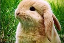My Rabbit / Twitchy noses and cottontails... Rabbits always have a spring in their step!