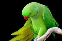 My Bird / Birds are majestic and intelligent creatures that make wonderful companions.
