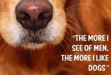 Inspirational Pet Quotes / Every Thursday we bring you an inspirational pet quote for you to ponder!